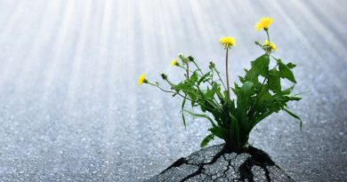 What is resilience and how can it help you throughout your life?